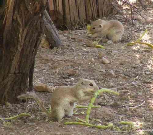 PrairieDogs